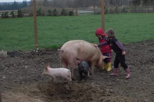kids-with-pigs2