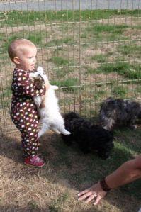 audie picking puppy