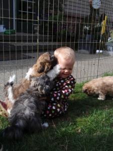 Audie & pups