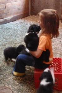 rylee and more puppies